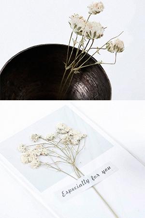 안개꽃드라이플라워카드타입